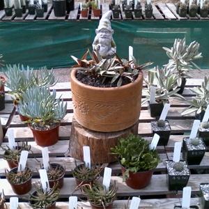 Nursery, JMDC