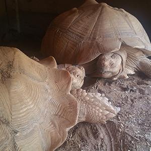 tortoise, JMDC